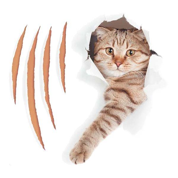 коррекция поведения кошек - иконка