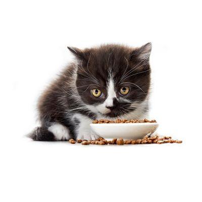корм для котят - иконка