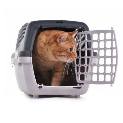 переноски для кошек - иконка