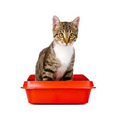 лотки для кошек - иконка