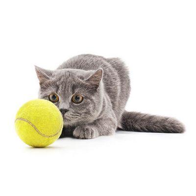 игрушки для кошек - иконка