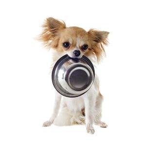 миски для собак - иконка