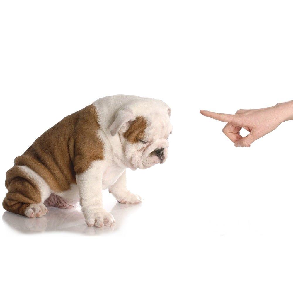 коррекция поведения собак - иконка