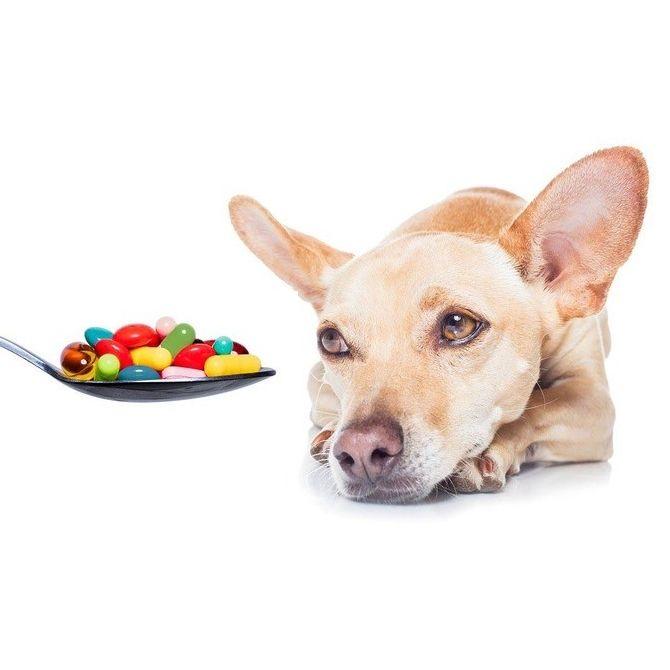 витамины и добавки для собак - иконка