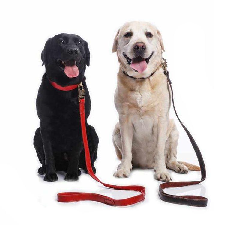 амуниция для собак - иконка