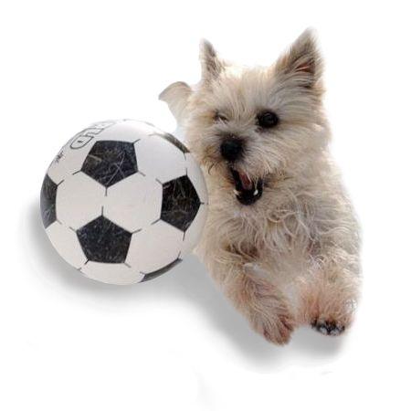 игрушки для собак - иконка